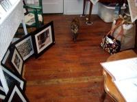 cat standing on wood floor