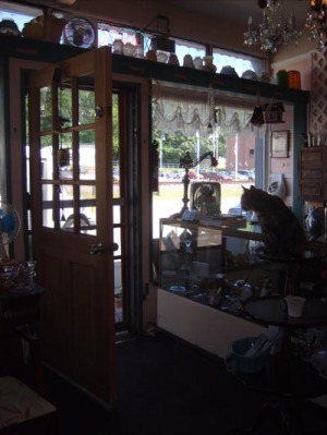 cat on counter looking out door