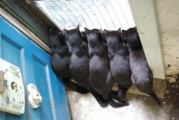 five black cats at basement door