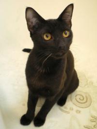 black cat in tub