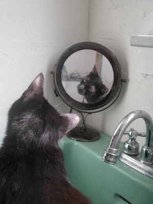 black cat looking in mirror