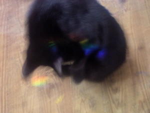 blakc cat with rainbows