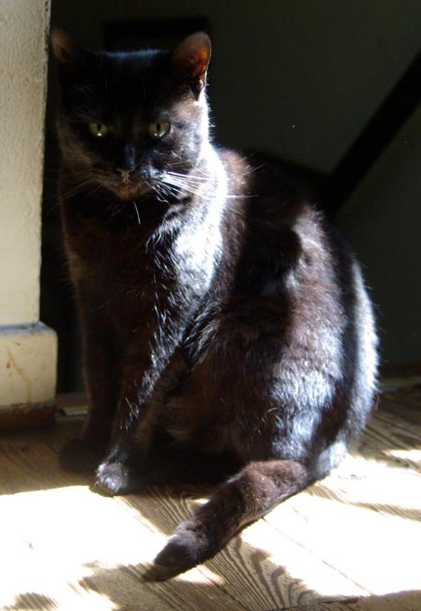 photo of black cat in the sun