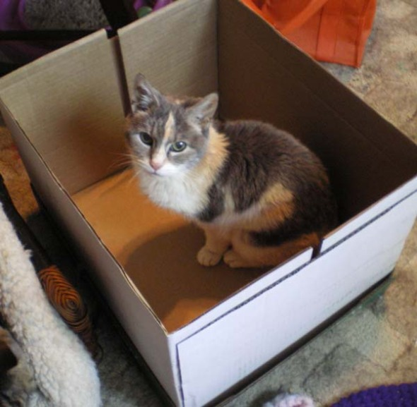 photo of cat in box