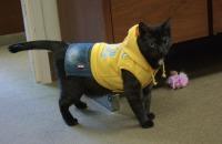 photo of cat in costume