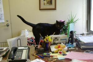 photo of cat on desk