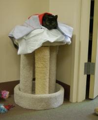 photo of cat on cat tree