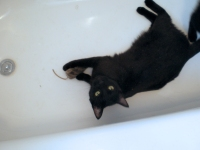 black cat with mouse toy in tub