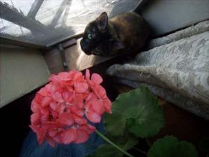 photo of cat with geranium
