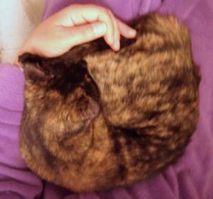 photo of cat on lap
