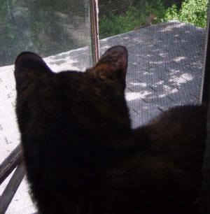 cat watching squirrel