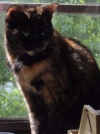 photo of cat on windowsill