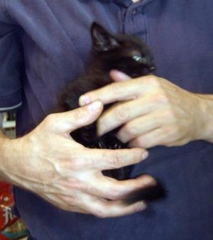 black kitten don