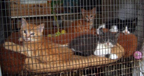 kittens back
