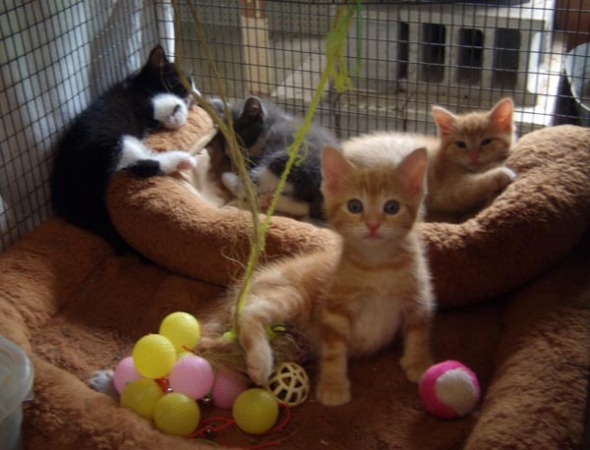 kittens front