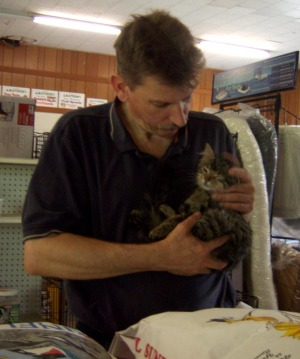 tabby kitten with don