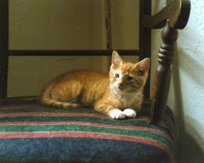 Timmy the kitten