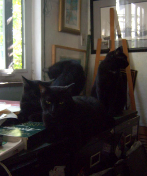 Four black cats on a table