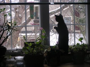 black cat at snowy window