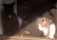 two cats at screen door