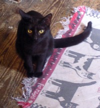 black cat on edge of rug