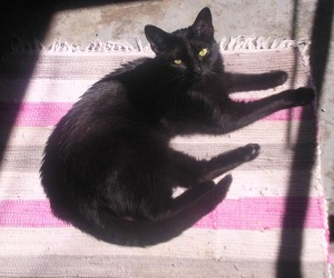 black cat on striped rug