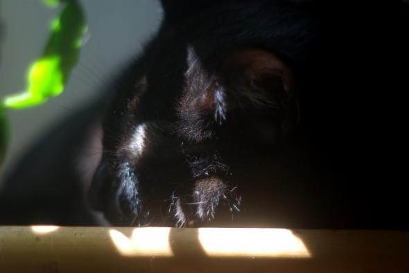 black cat sleeping in the sun