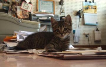 photo of striped kitten