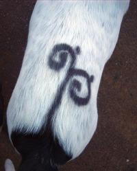 spray on tattoo on dog