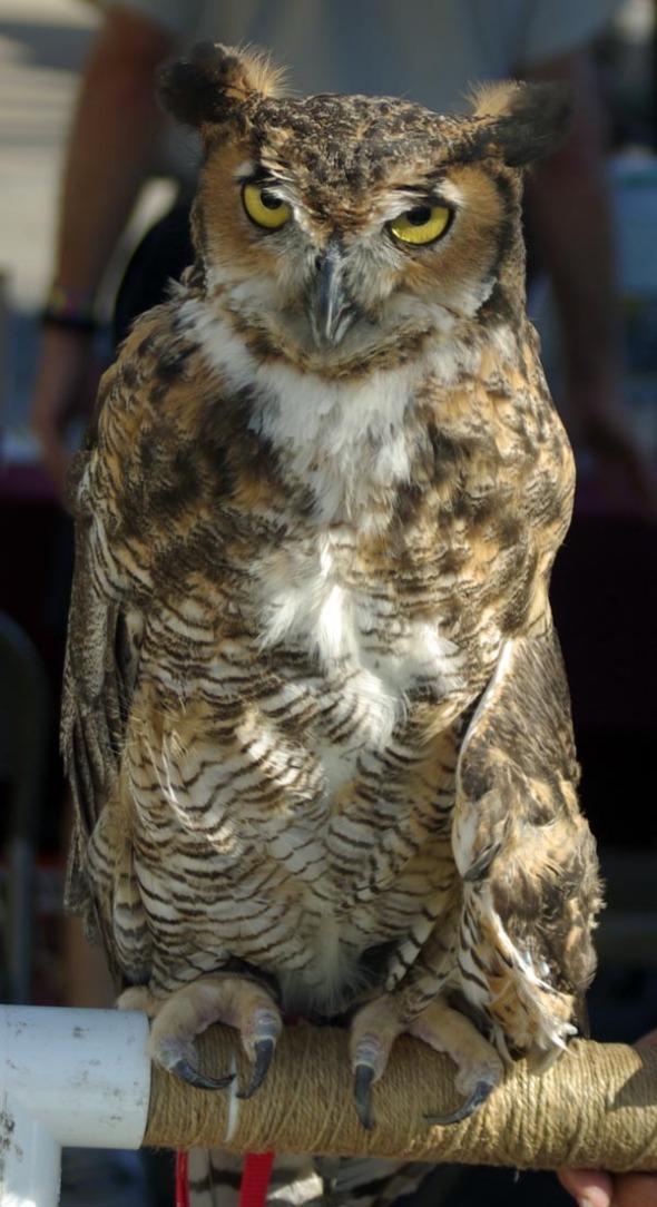 martha the owl
