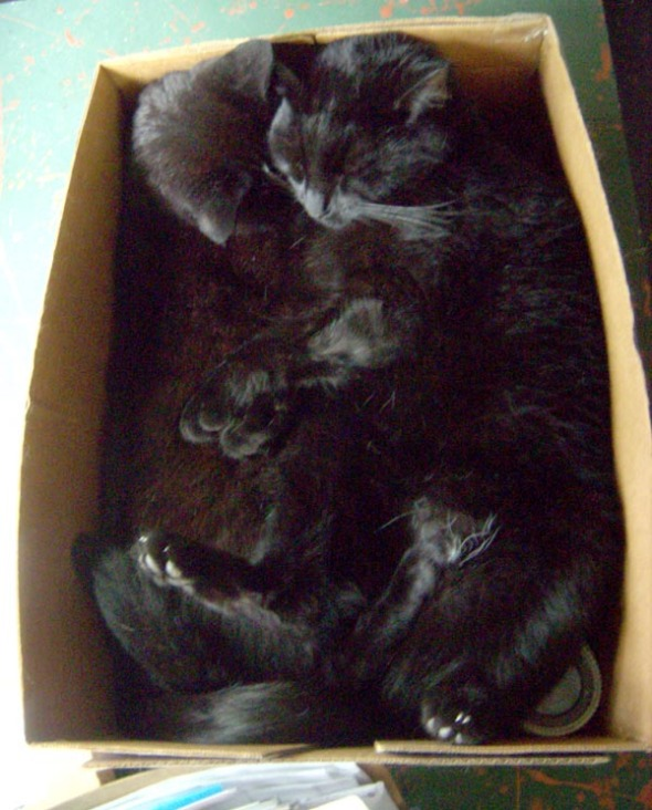 two black cats sleeping in box