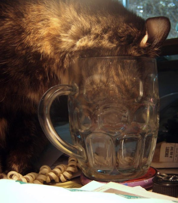 cat with her face in a glass