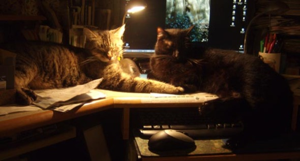 two cats on desk