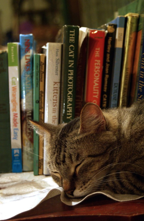 tabby cat in the books