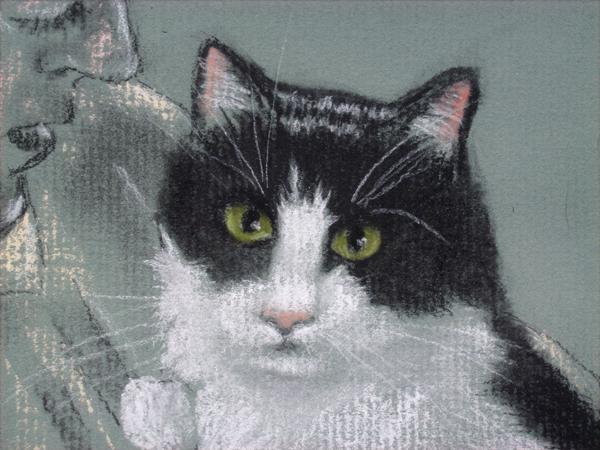 tuxedo cat face close up