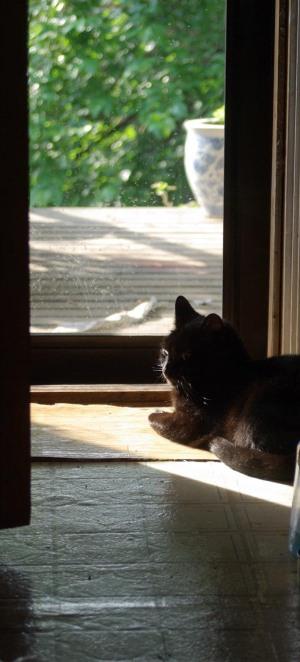 black cat at door