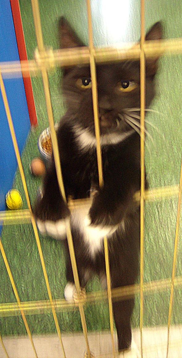 kitten in front of wire barrier