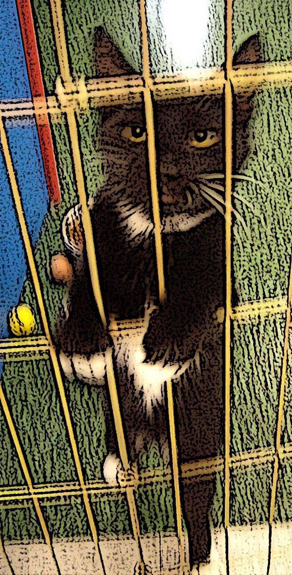 petco kitten retouched