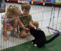 kitten playing with kids