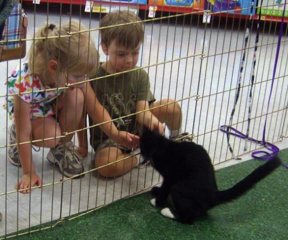 kitten playing with kids