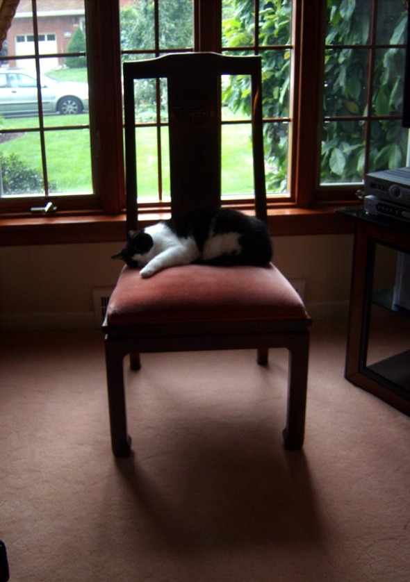 photo of cat on chair
