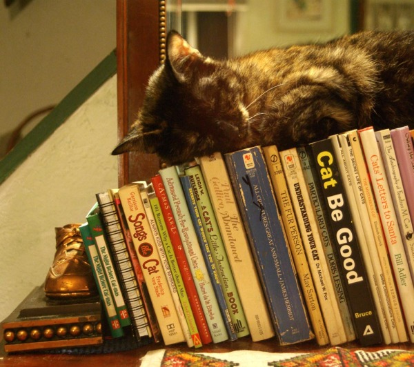 tortie cat sleeping on books