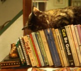 tortie cat sleeping on books