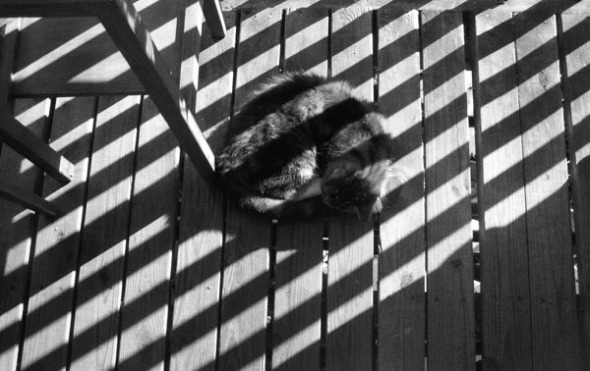 striped cat and striped shadows