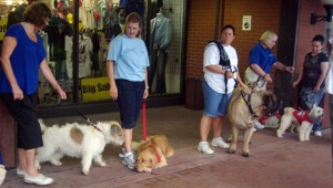 several dogs and people