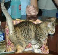 Kitten greets people