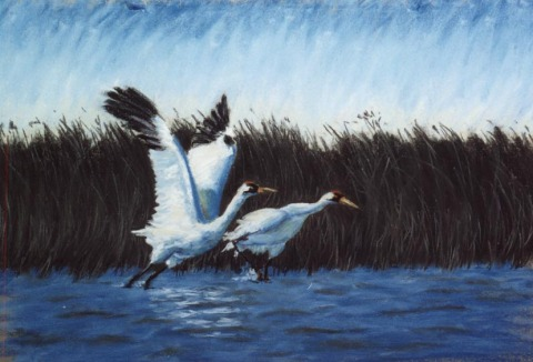 pastel painting of whooping cranes