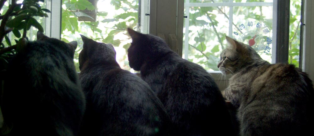 four cats staring out a window