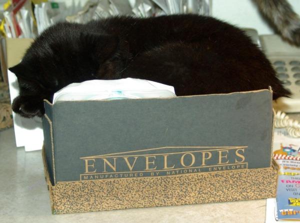 Photo of cat in envelopes box