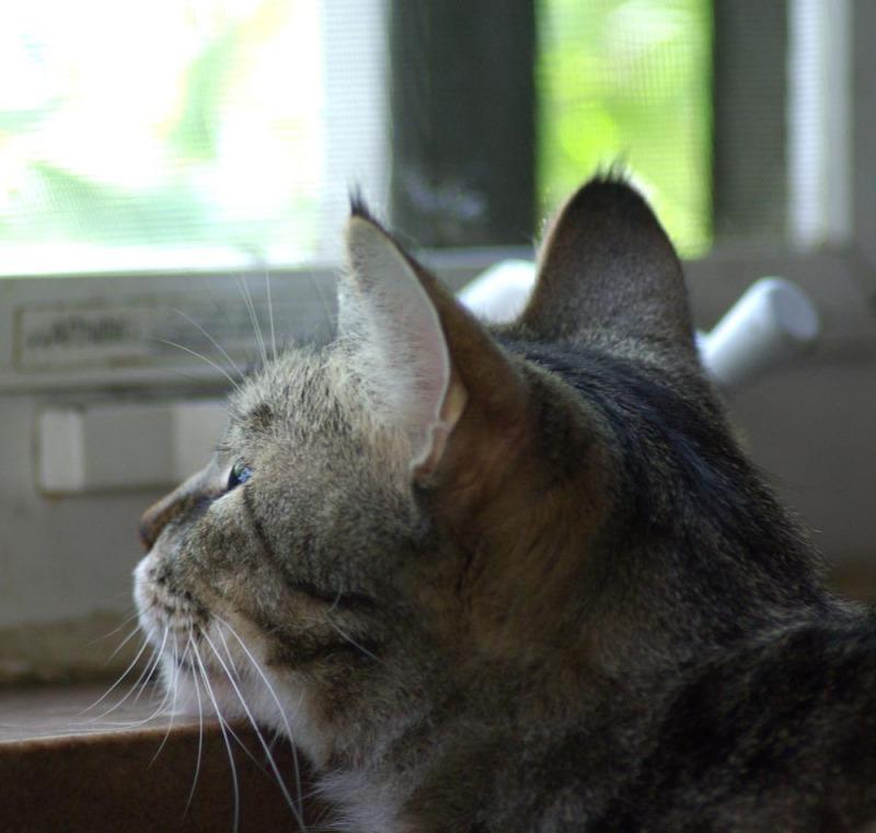 cat with chin on windowsill